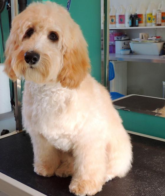 Just 4 paws dog grooming services for 4 paws dog salon